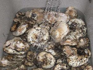 перед засолкой грибы следует хорошо помыть